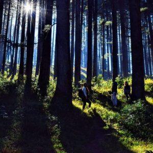 Kanatal forest