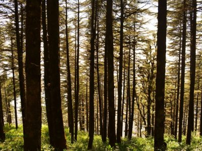 Things to do in Kanatal